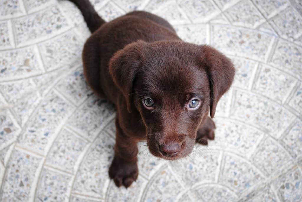 paura-traumi-cane